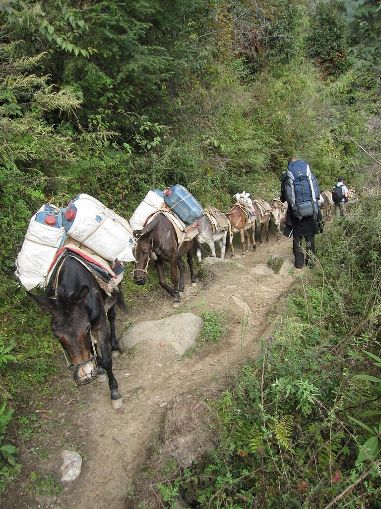 Donkey fuel line