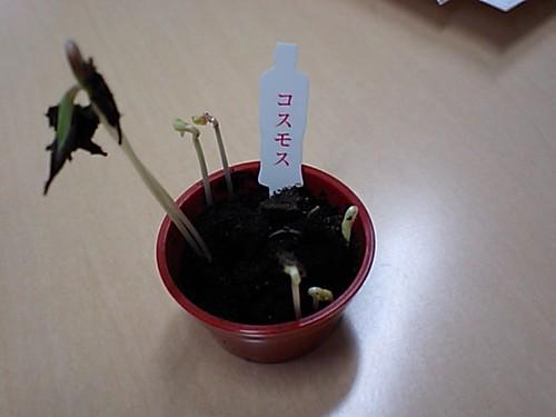 小さな植木鉢