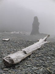 Driftwood And Sea Stack (Ryan Hadley) Tags: usa seascape beach nature fog landscape washington nationalpark log hiking shoreline worldheritagesite driftwood pacificocean shore olympic rubybeach olympicnationalpark seastack kalaloch interestingness330 i500 explore16june2007