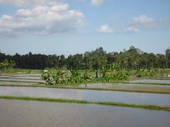 IMG_1431 (jxbfr) Tags: bali ricefields tanahlot balisunsets