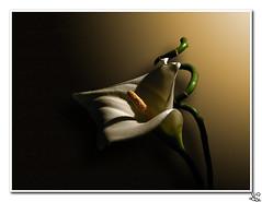 Una flor.. y un blog.. - by Guesus