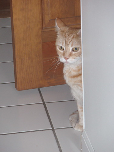 Fraidy Cat : (