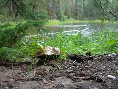 mushroom at Ranger Lakes (zx147) Tags: colorado stateforest coloradostateforest rangerlakes