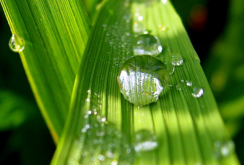 blessing of nature par ichiro kishimi