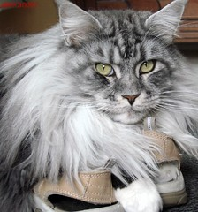 Maxwell liebt Schuhe und Ruhe