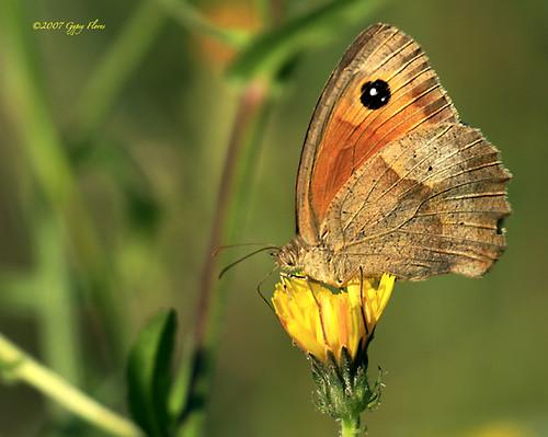 Butterfly in the Castagniccia
