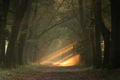 beams of light * explore * (dewollewei) Tags: light sunrise woods image getty beams overijssel gettyimages ommen gettyimage forrests landgoed greatphotographers beerze