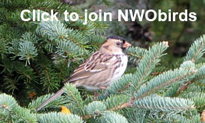 Click to join NWObirds