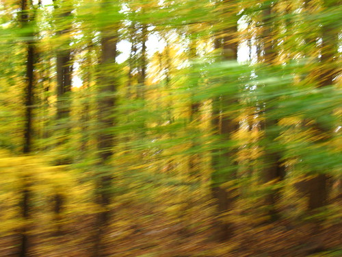 beech forest, driving by