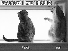 lolcat adaptation #1