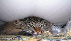 cat-squeeze