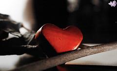 :: بدونك كل شي يذبل و يبقى قلب لك ينبض :: (QiYaDiYa) Tags: love hart fatma قلب حب almeer نبض arabtop ذبول