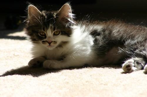 Our Cat Nala