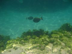 img_0567.jpg (jfrelinger) Tags: underwater discoverycove sd600 110ft