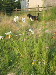 Prairie flowers (and Nellie)