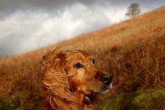 Dog Modelling