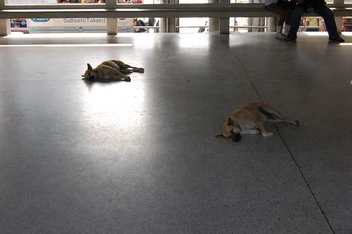 Sa Sothorn船着場で寝ている犬