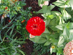 (Amlaith) Tags: flower fleur germany deutschland flor blume allemagne saarland sarre homburg