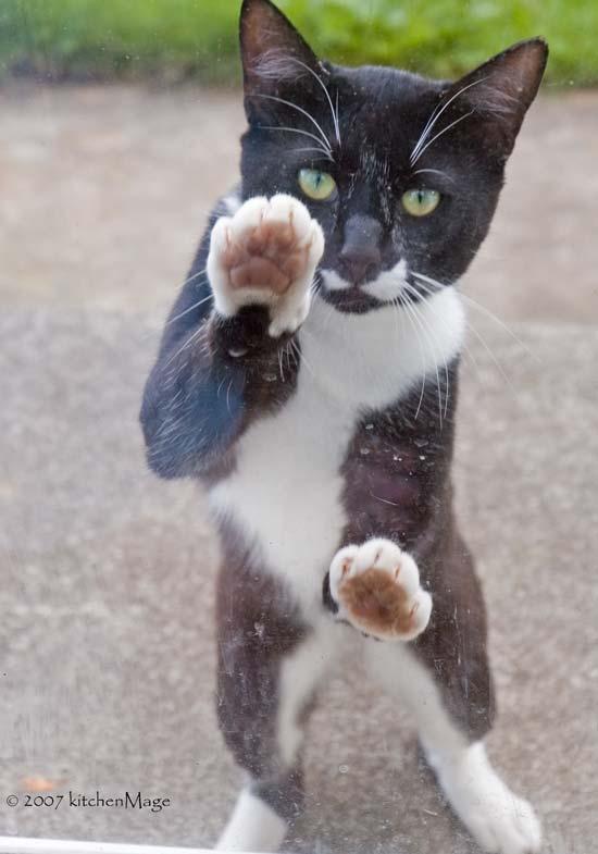 ''ssouri wants in!