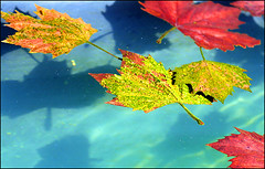 a1237 Autumn Leaves Afloat (tengtan (away awhile)) Tags: city autumn winter fall pool leaves sunshine pond shadows coins decorative bottom arts australia melbourne photofriday glowing casting lensday stkildaroad drift precinct nationalgalleryofvictoria seeitsunday mywinners superbmasterpiece auselite newacademy foxforcewinner