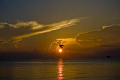 stillness (alexdecarvalho) Tags: ocean sun beach nature sunrise dawn flying movement peace time miami flight atlantic zen fl meditation moment fleeting miamibeach stillness 2007 earlybird goldtone fbfavprof sobeatlantic vlayout fbpics