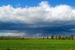 quiet forest (Sakuto) Tags: rain clouds forest dead rotten belarus belarusiannature