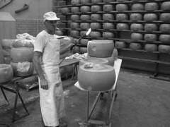Craft of Parmagiano Reggiano (butsugiri) Tags: travel friends wallpaper italy cheese geotagged interestingness europe culture emilia parma reggiano italians hundredpics parmagiano romanga butsugiri davidjstern
