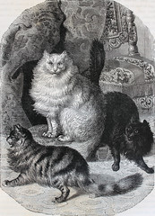 1028167 (El Bibliomata) Tags: old art leather illustration century cat vintage buch fur book arte antique illustrated libro illustrations drawings books gato engraving plates livro manufactura dibujos livre industria antico antiguo xix 19th cueros ancien antigo engravings ilustraciones gravura alte siglo manufacturing angoracat gravur grabados gravure pieles lminas ilustrado furindustry industriapeletera gatodeangora bibliomata