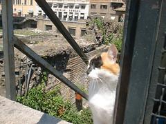 DSCF0040 (lilbuttz) Tags: italy animals cat mammals accentflorencespring2002