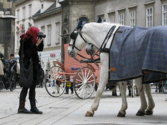 Photoshoot - Stephansplatz - Vienna (Been Around) Tags: vienna wien horse girl animal animals lady austria tiere sterreich europa europe niceshot foto photoshoot platz travellers eu april innercity oldtown pferde pferd manner tier autriche innenstadt austrian fiaker 2010 aut stephansplatz  ststephan 5photosaday a concordians thisphotorocks worldtrekker visipix expressyourselfaward flickrunitedaward bauimage