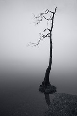 Lost (Spencer Bowman) Tags: mist lake reflection tree beach water silhouette fog arbol lost mono calm minimal dreamy loch solitary tranquil isolated contour sparse albiro sonya450