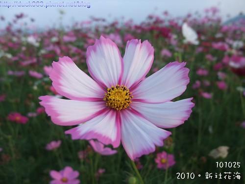 DSCF1940花