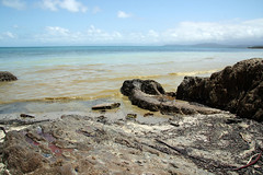Washed up Coral Spawn at Cape Kimberley Beach in the Daintree National Park (emblatame (Ron)) Tags: ocean beach barrier daintree coralspawning capekimberley islandpacific coralseagreat reefqueenslandaustraliasnapper