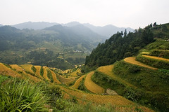 Rice terraces (kevinlamphoto) Tags: china travel mountains landscape asia village rice farming chinese terraces hills crop agriculture hazy guizhou ethnic minority shui minorities mountainous