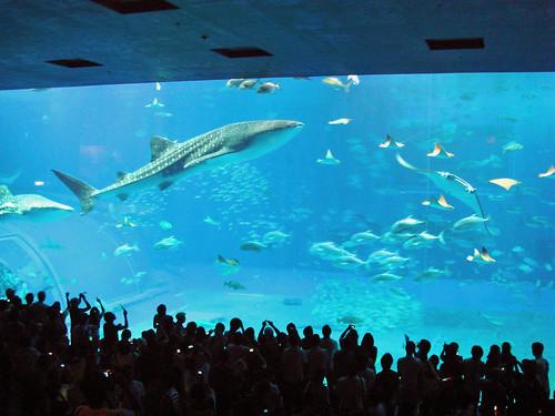 070909 沖縄美ら海水族館