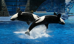 X (~~[(QTR)]~Mubarak~) Tags: blue usa hot florida dora waters whales fl shamu humid doha qatar thanx whalesharks qtr 40c seaquarium 35faves p1f1 fiveflickrfavs forremindingme npmubarak mubarakqtr mubarakqatar