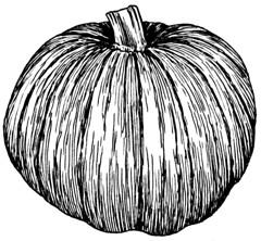 Pumpkin_(PSF)