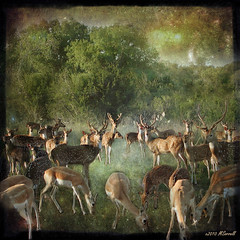 Other Nations (Passion4Nature) Tags: texas antlers textures hillcountry legacy axisdeer theworldwelivein blackbuckantelope fantasticnature othernations dragondaggerphoto artistictreasurechest oracosm magicunicornverybest selectbestfavorites selectbestexcellence magicunicornmasterpiece sbfmasterpiece