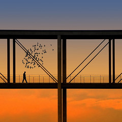 Guest in their world (Nespyxel) Tags: bridge sunset man berlin lines birds silhouette architecture backlight germany walking t deutschland flying tramonto flock flight ponte volo uomo lepetitprince germania controluce b