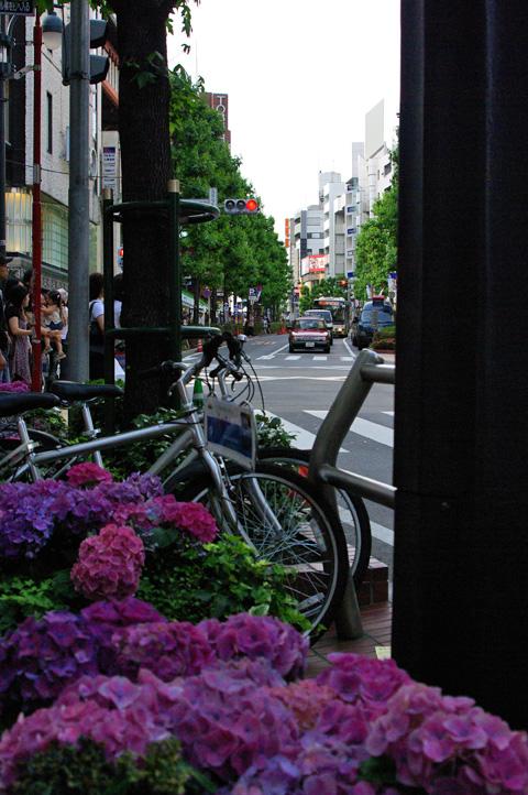 Shibuya Kouendo-ri 01