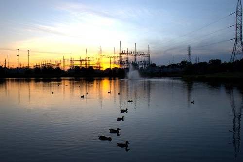 Ducks at sunset