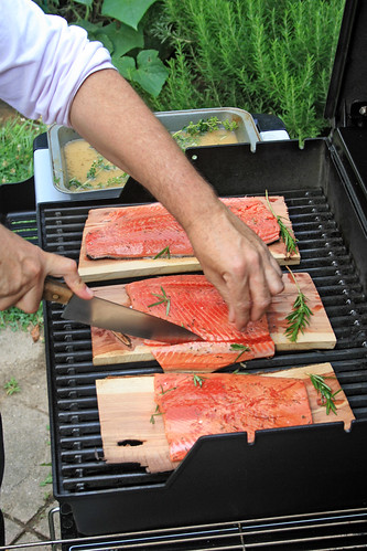wild salmon grilled on a cedar plank