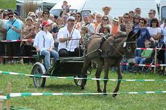 IMG_8647.jpg (roadtek) Tags: donkey esel