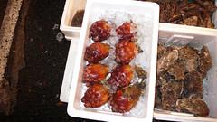 P1000907.jpg (alexwoods) Tags: japan tokyo tsukiji 2007 hoya seasquirt seapineapple