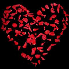 Szeretettel / With Love (ssshiny) Tags: love rose heart petal rosepetal szív szirom rózsa szerelem rózsaszirom