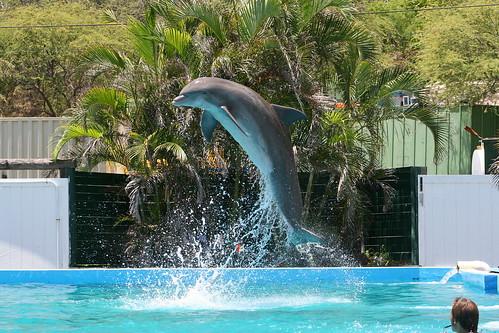 Dolphin at Sea Life Park, Oahu.