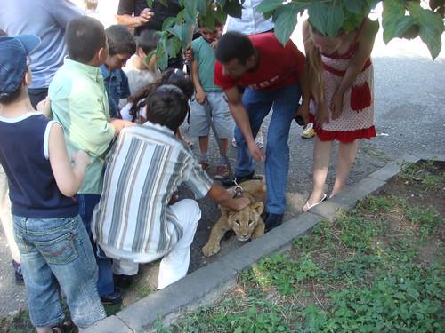 Pet the Lion Cub