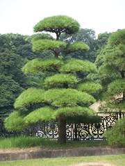 Tree by Seimon-Tetsubashi Bridge
