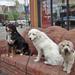 Cleo, Max, Rowan