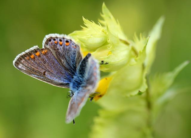 การควบคุมแมลงศัตรูพืชแบบอินทรีย์ Organic
